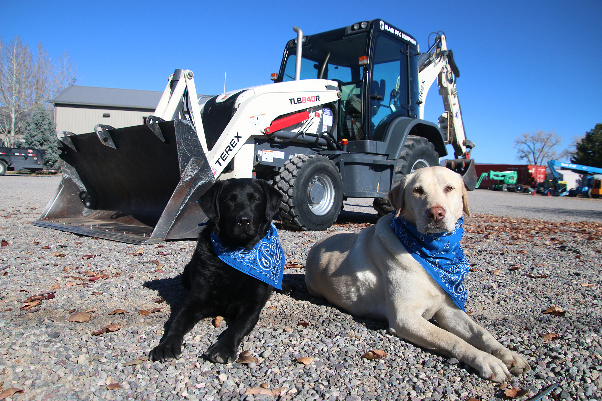 dogs at a construction site