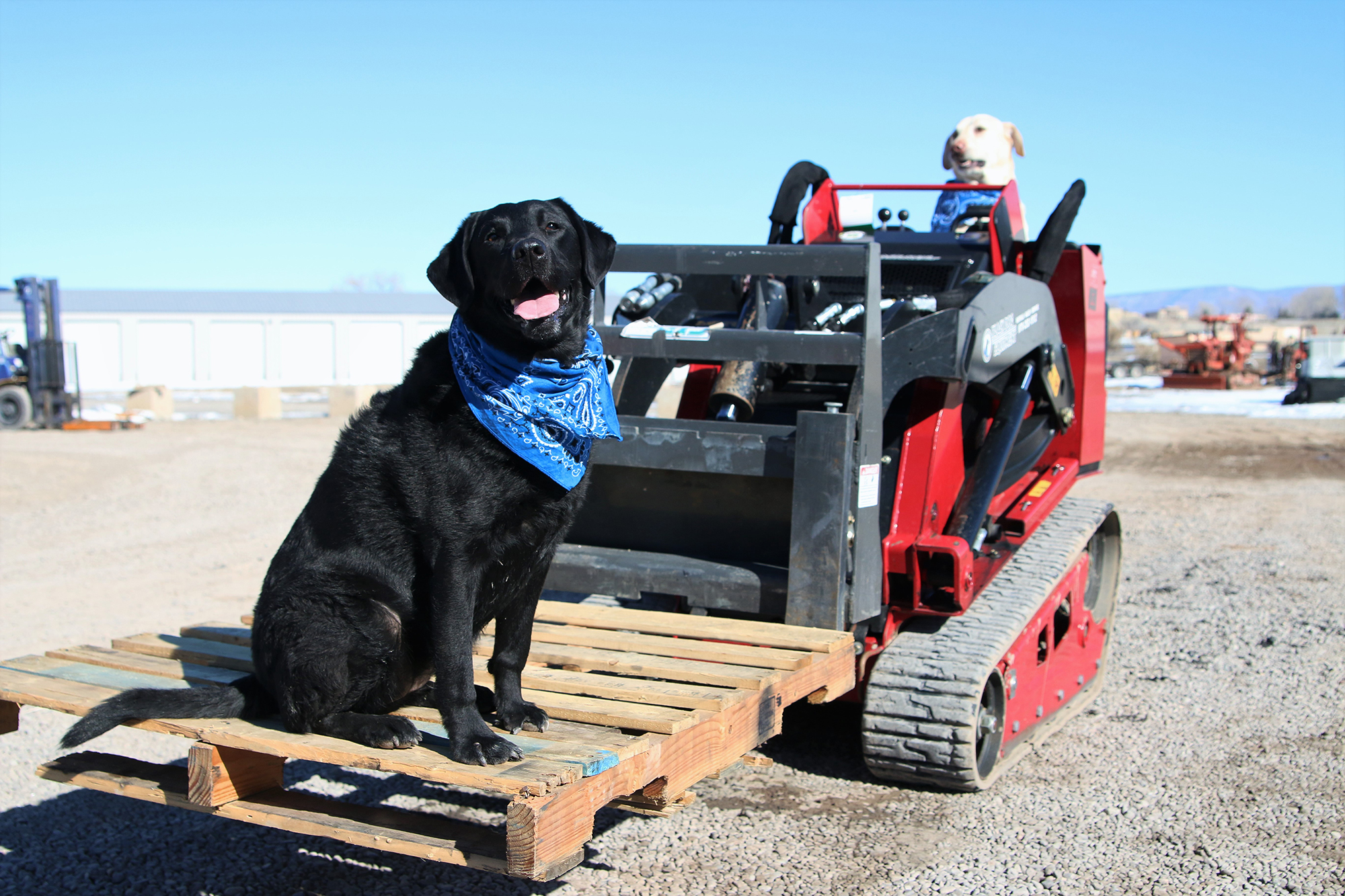 dogs on construction equipment in Colorado