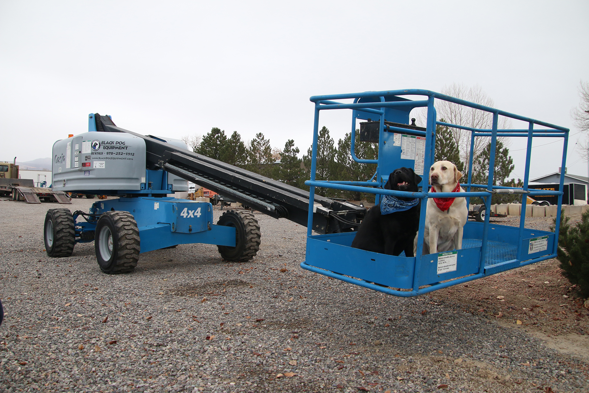 black dog equipment rentals